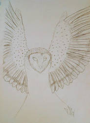 Owl by JerichoVanburen