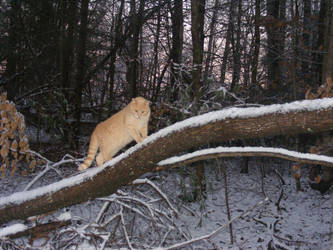 My Mountain Lion by forty-foursunsets