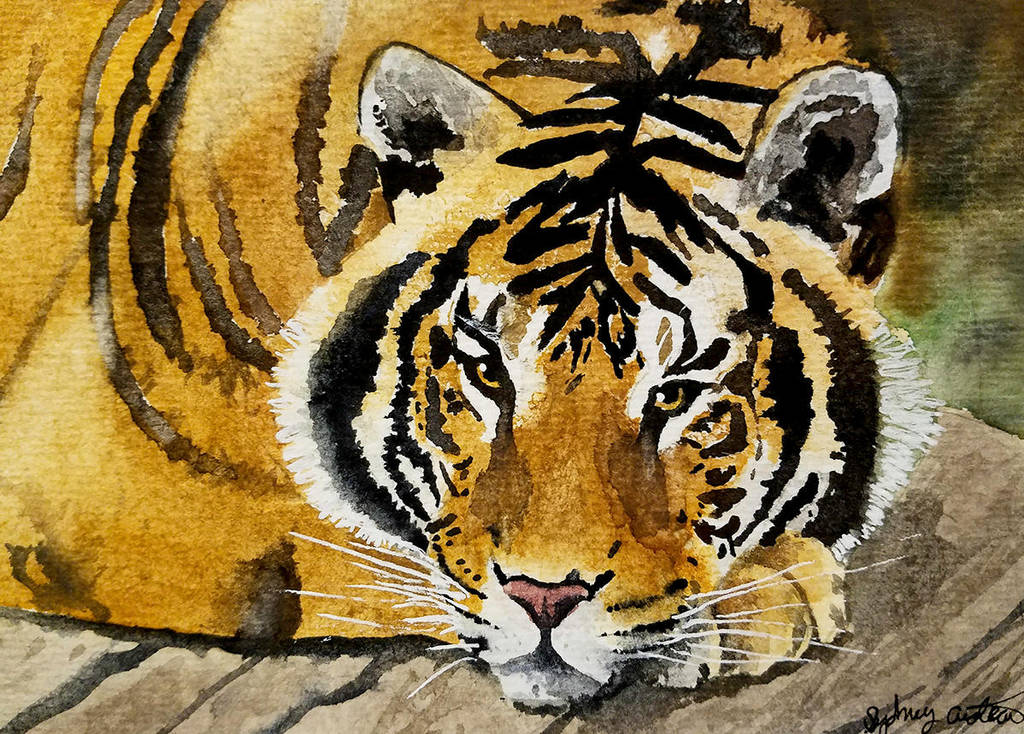 Watercolor Tiger by SRfineArt