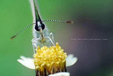 eye butterfly by KFT-Andri