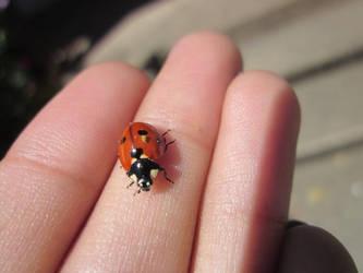 Little Lady Bug by BigBabyBird