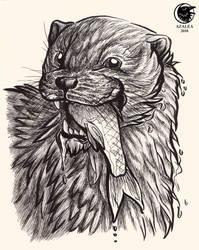Otter noms by arsnoctu