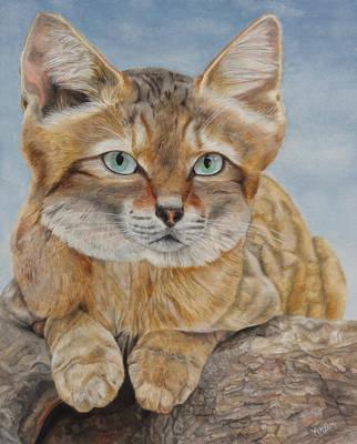Sand Cat by Mararda