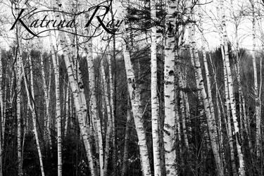 Birches by KRaySaulis