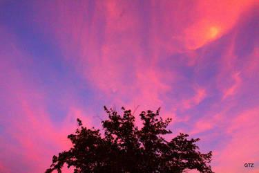 pink  by MrGutierrez