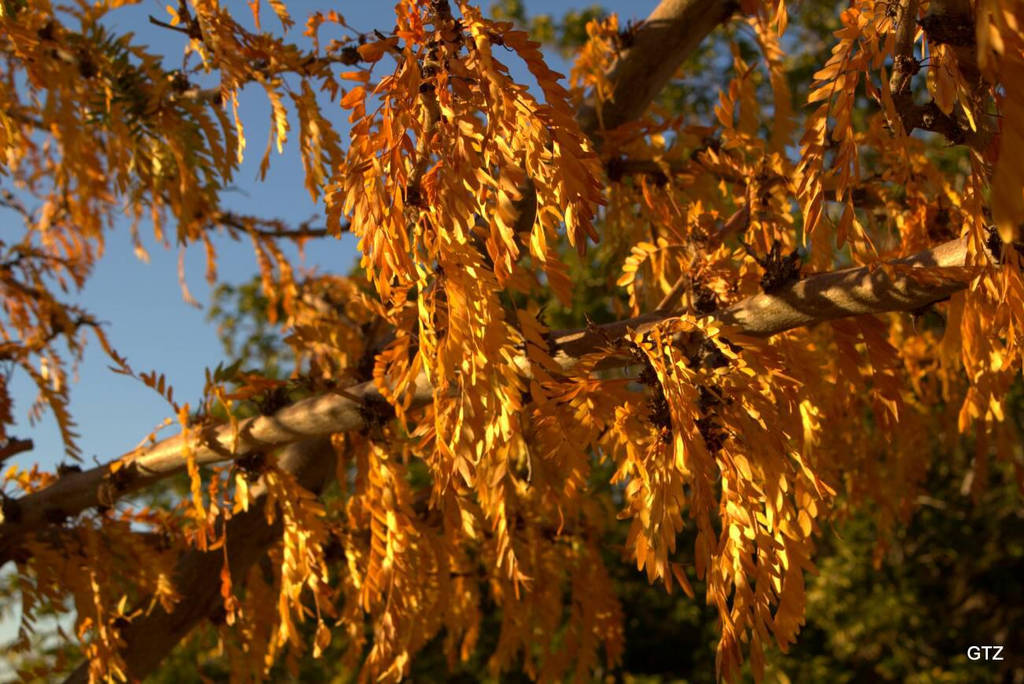 autumn vibes by MrGutierrez