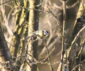 Bird by Kianits