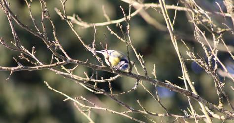 Bird 2 by Kianits