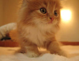 my cat by mamboART