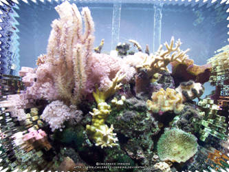 Coral Reef by Childress-Imaging