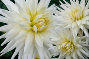 The Flowers That Be - II by miravisu