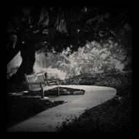 Silent Sunday by EmiNguyen