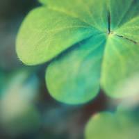 Sensitive Green by EmiNguyen