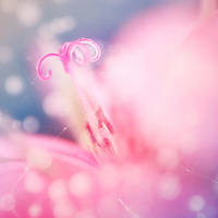 Sweet Blossom by EmiNguyen