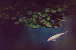 Like Shadow by EmiNguyen