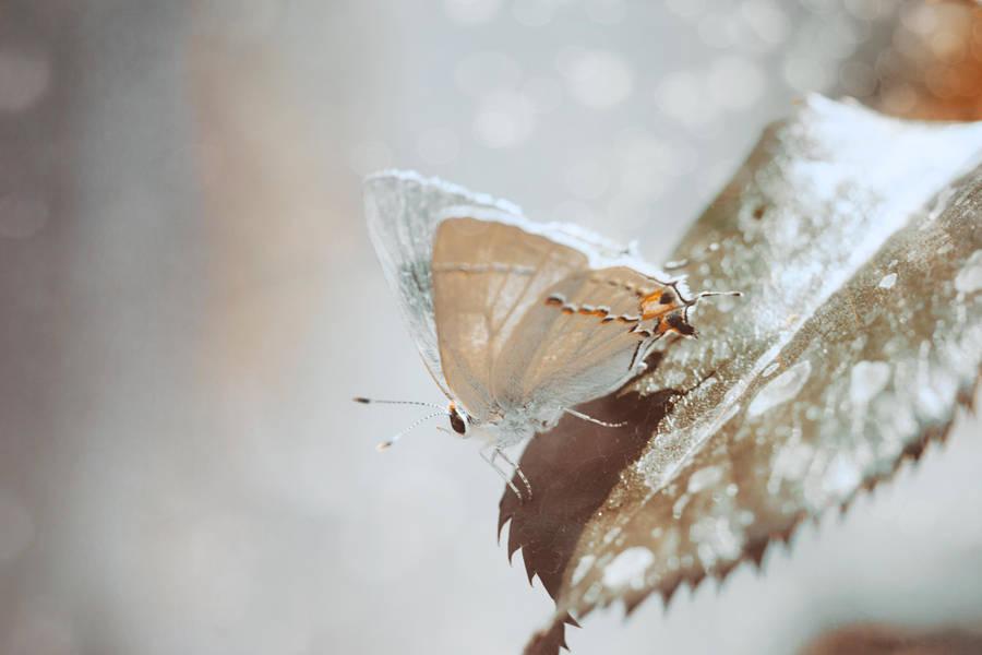Lost Butterfly by EmiNguyen