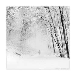 alone in white by detail24