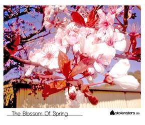 The Blossom Of Spring by StolenStars