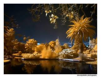 Infra Red - Queens Park by stevenjo