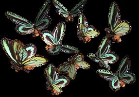 Queen Alexander Birdwing PNG by madetobeunique