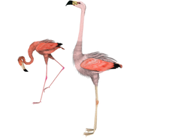 side flamingo 3d stock pngs by madetobeunique
