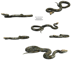 Python Snake FREE transparent by madetobeunique