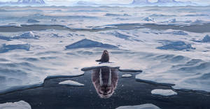 Small seal Big dreamer by HjalmarWahlin