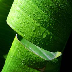 Green Wonder by Draculea666