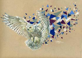 Snowy Owl by DLiz3