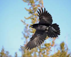 Grape flight by Canislupuscorax