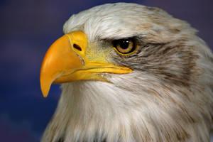 Eagle Eyes by loukapics