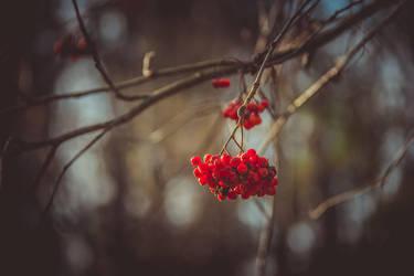 Autumn by DareToBelieve