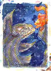 Coelacanth loves Goldfish ATC by belyaal