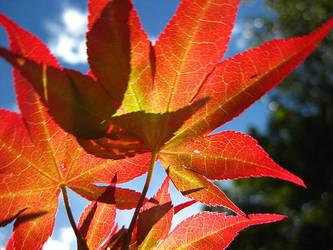 Autumn breath by ChillzWow