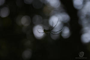 Spooky Orchard Spider 1 by leopardwolf