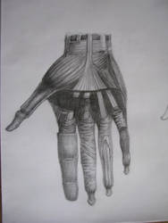 Nevart-anatomy lesson-14 by NevartSanat