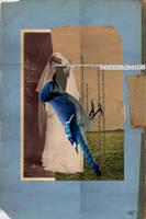 THISTLE BIRD by nodah