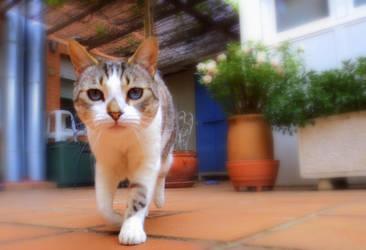 Cat Walk by paria228899