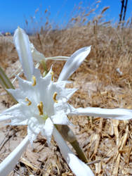 White Blossom by paria228899