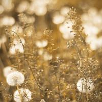 .Gold. by zeenon