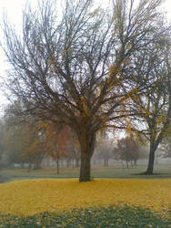 One foggy fall day by Spazbulb