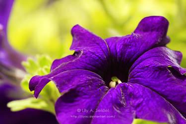 Summer Love by Lilyas