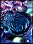 Blue Diamond by Lilyas