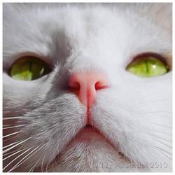 Nosy by Lilyas