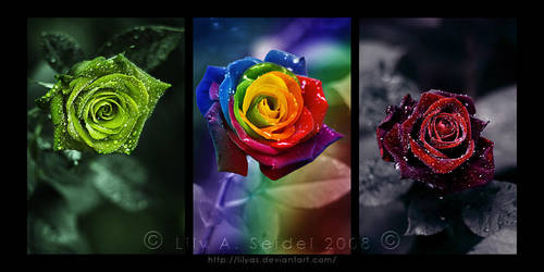 Magical Roses Triptych by Lilyas