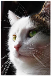 Pretty Cat Ben by Lilyas