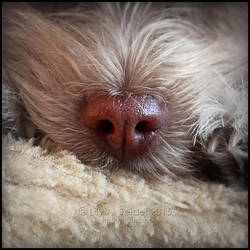 Puppy Nose by Lilyas