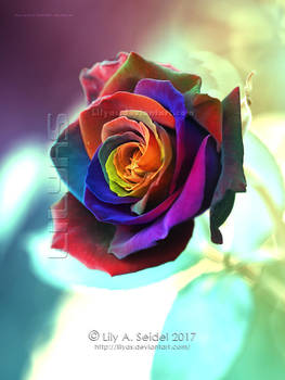 Magical Rose Rainbow - Unlimited STOCK by Lilyas