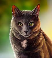 Pet Portrait Memoir - Pippin by preimpression