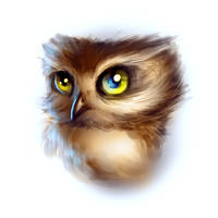 Baby owl - Digital drawing practice by Ankredible
